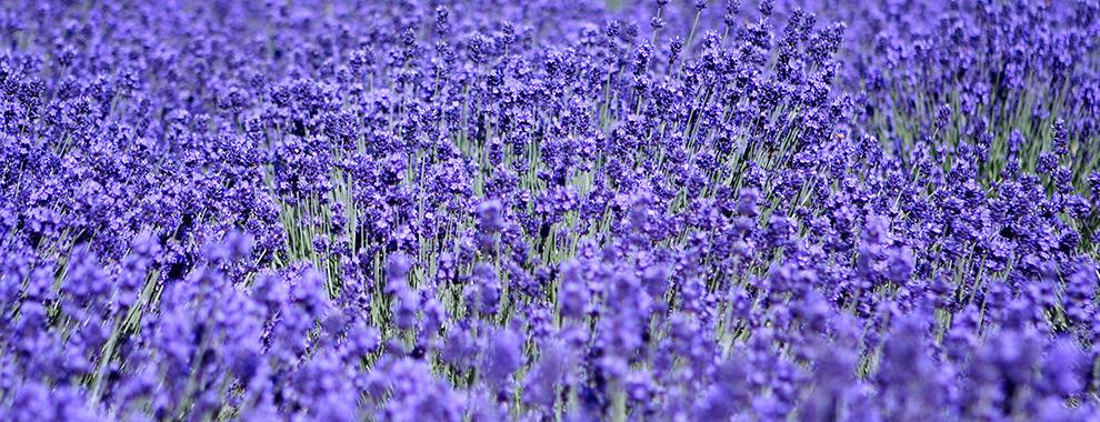 slide_lavender